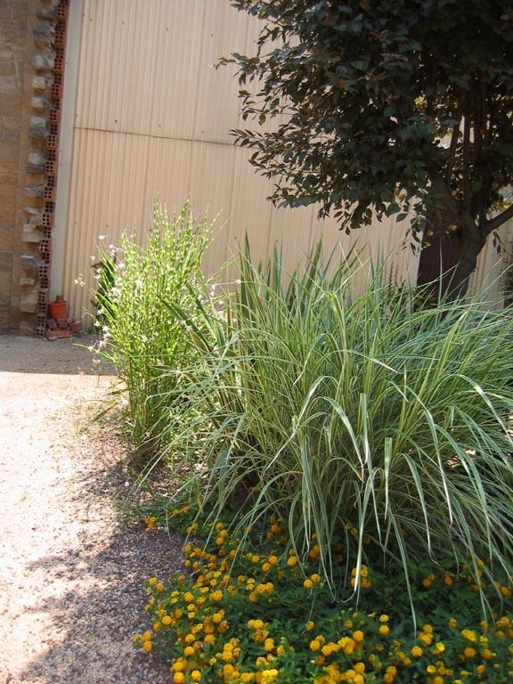 Plantas para jardineras al sol dise os arquitect nicos - Plantas resistentes al sol para terrazas ...