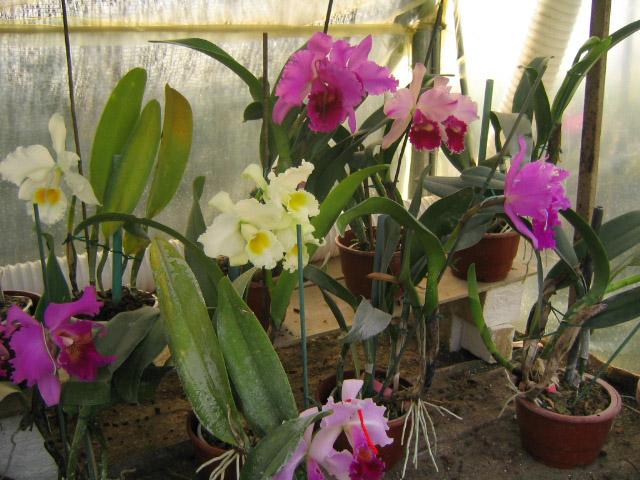 Tiendas mi visita a vivero r o seco de nerja m laga for Vivero mi planta