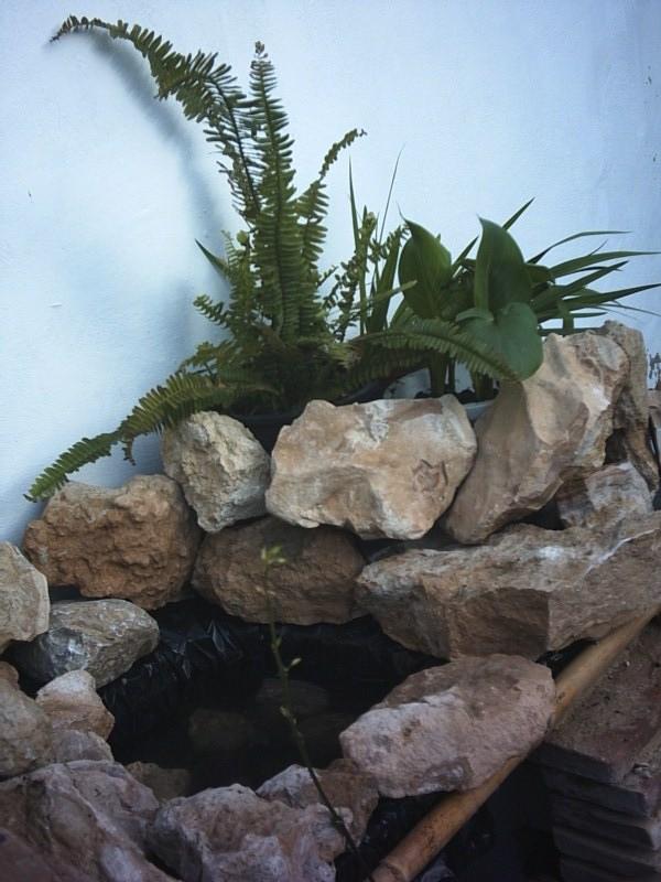 estanques caseros (NiLo) PHTO00054