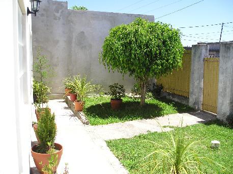 Ficus benjamina en el jard n poda y foto y da os por for Hormigas en el jardin