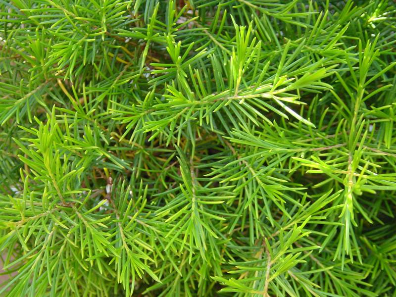 Varias especies de arbustos for Especies de arbustos