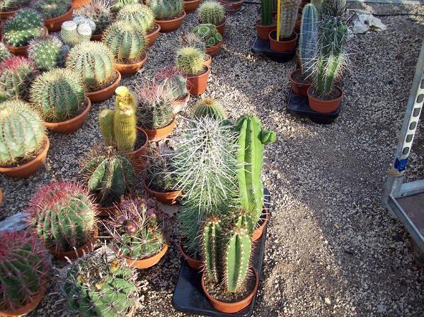 D nde comprar cactus y crasas tiendas y viveros for Jardin cactus madrid