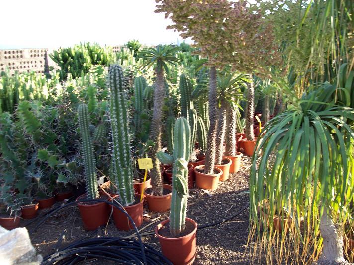 D nde comprar cactus y crasas tiendas y viveros for Viveros baratos
