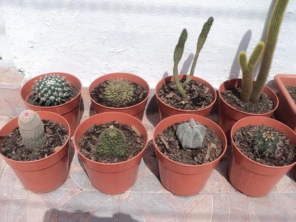 Sustratos y tierras para cactus - Como transplantar cactus ...