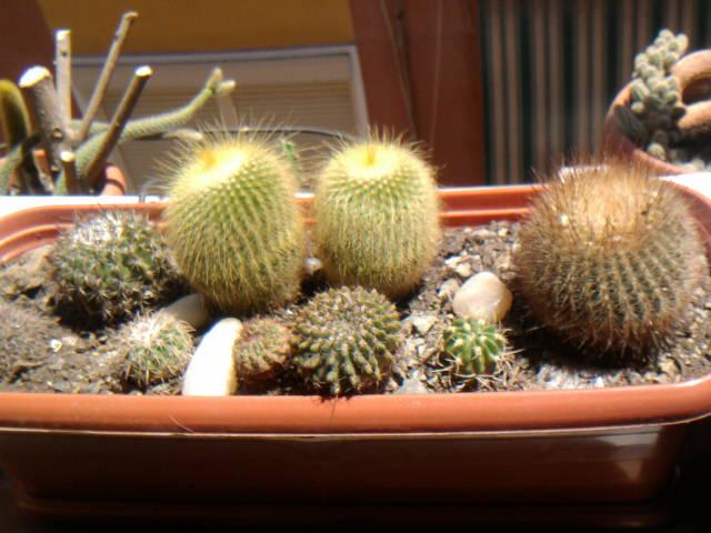 Macetas para cactus y suculentas