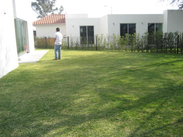 Gram n o grama de san agust n for Zacate de invierno