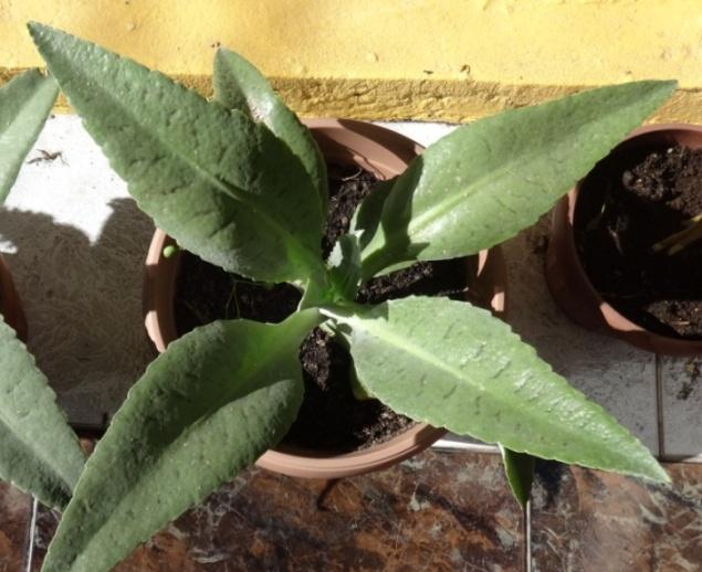 Comprar cactus y suculentas for Donde venden cactus