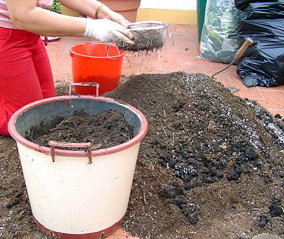 cultivo de plantas en maceta