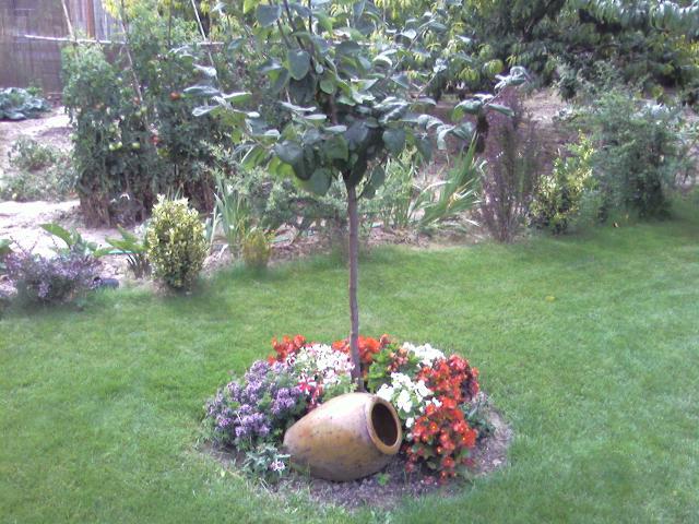 Qu plantar al pie de un olivo u otros rboles for Como decorar un arbol de jardin