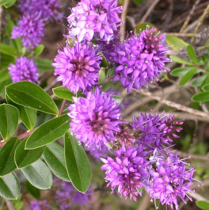 Plantas que aguantan el sol directo free latest with - Plantas de sol directo para jardin ...