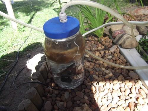 Mantenimiento del estanque for Filtro agua estanque