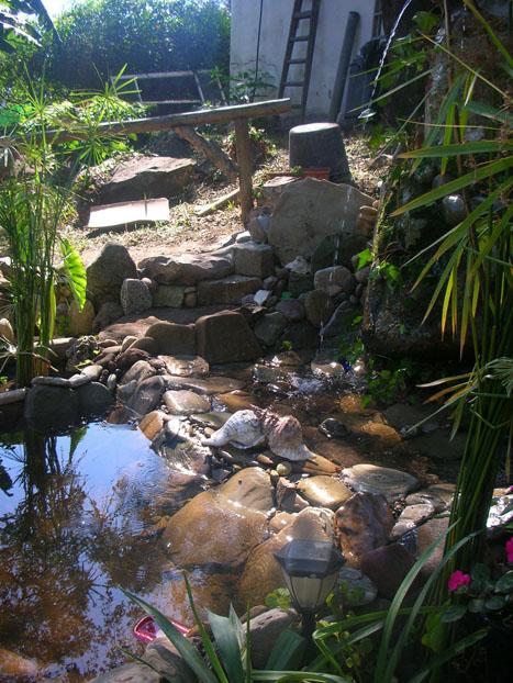 Fuentes para estanques for Plantas para estanques de agua fria