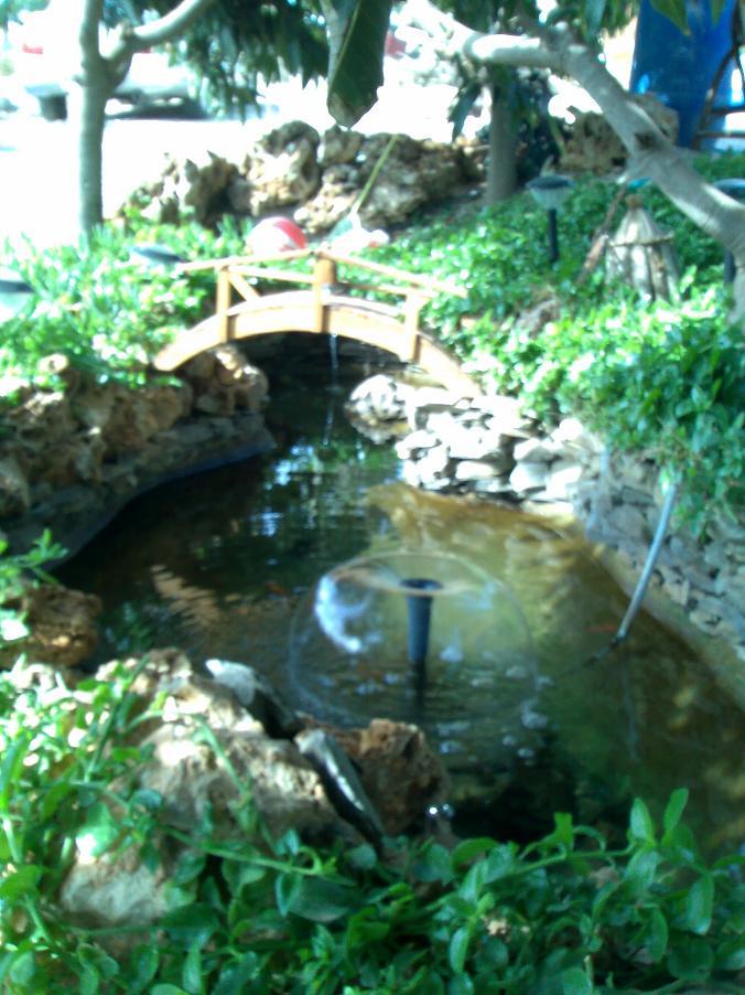 Algas en el estanque y c mo mantener limpia el agua for Como mantener el agua limpia de un estanque