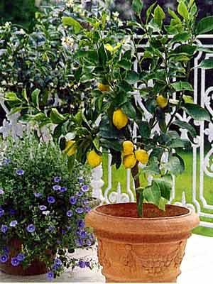 Multiplicaci n de frutales por semillas for Decoracion de jardines con arboles frutales