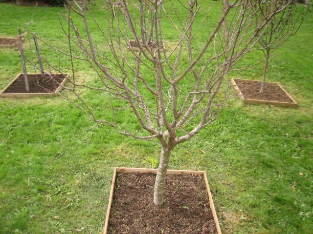Plantar frutales suelo distancias poca del a o etc - Plantar arboles frutales ...