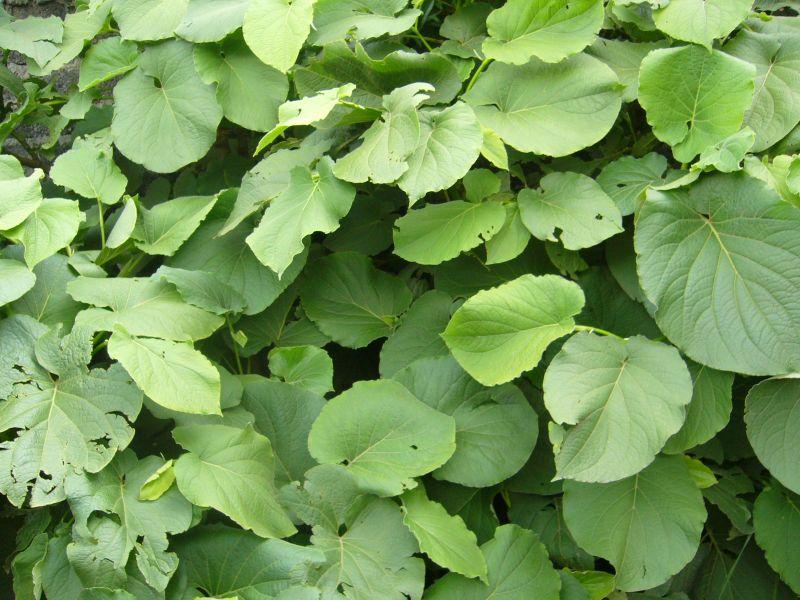 Varias plantas aromáticas y condimentos