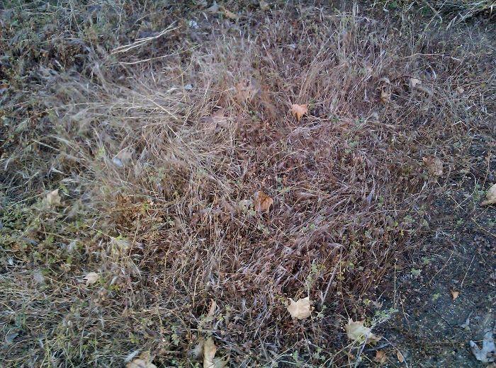 Sustratos para semilleros de hortalizas - Tierra para semilleros ...