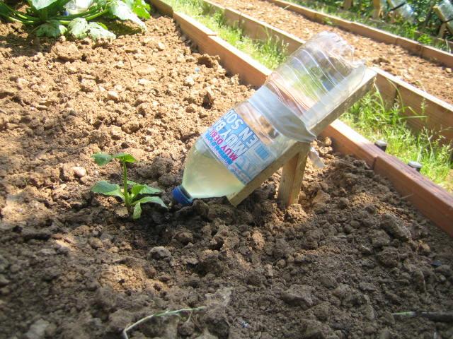 Капельный полив своими руками из пластиковых бутылок  122