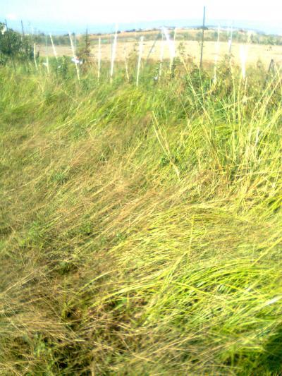 Quitar malas hierbas parcela elegant foto de planta for Como quitar la mala hierba del jardin