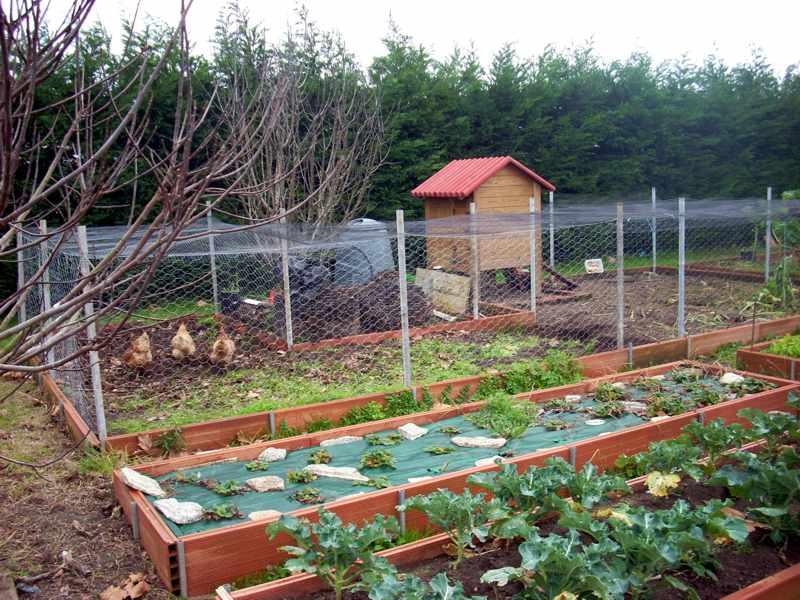Gallinero construcci n disposici n materiales etc for Gallinero jardin