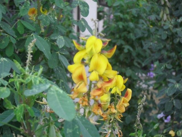 Flores silvestres (identificación)