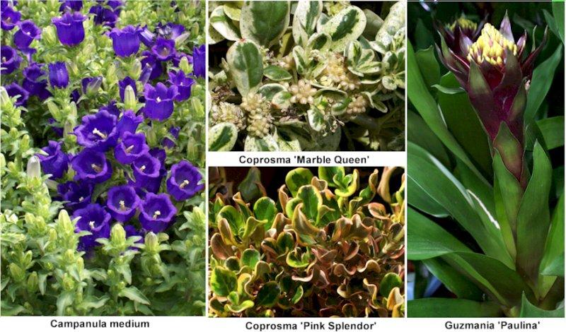 Fotos de plantas y flores for Origen de las plantas ornamentales