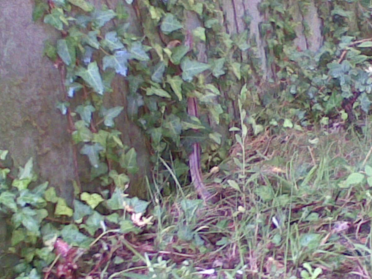 serpiente o culebra en el jard n plantas terraza o casa On casa jardin culebra
