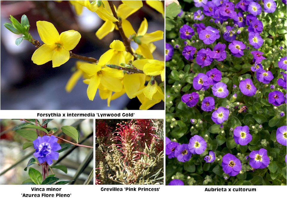 Fotos de plantas y flores for Que son plantas ornamentales