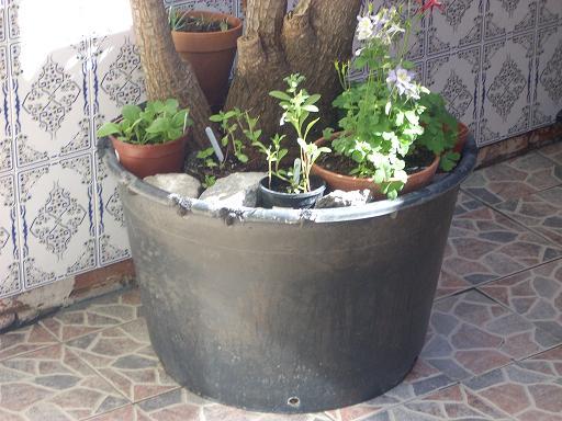 [Foto De Planta, Jardin, Jardineria]
