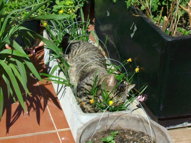 Como evitar que los gatos orinen en las macetas casa dise o for Como evitar los gatos en el jardin