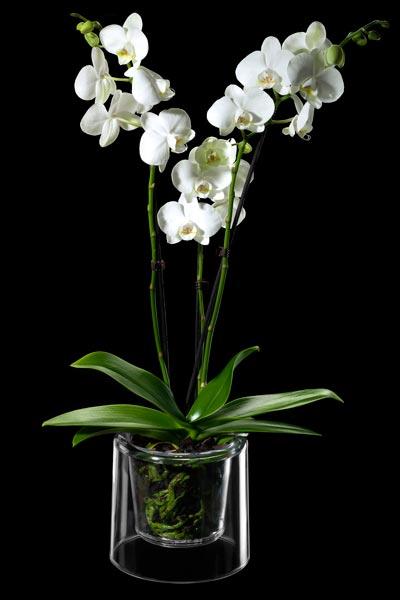 Macetas para phalaenopsis - Tiestos para orquideas ...