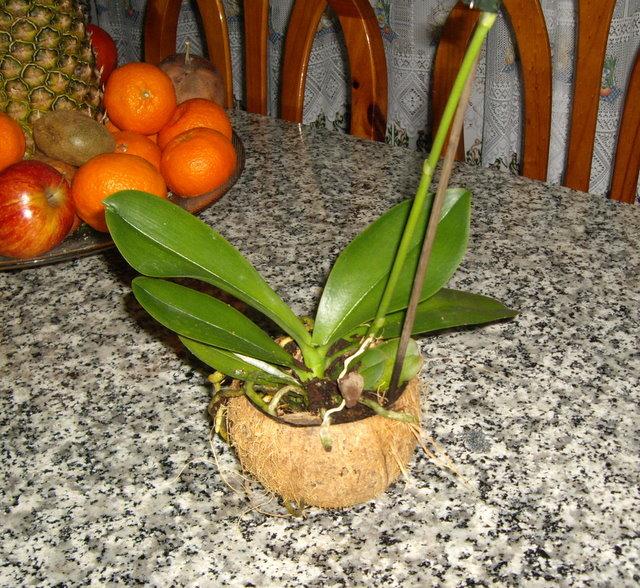 Macetas y cestas para orqu deas - Macetas para orquideas ...