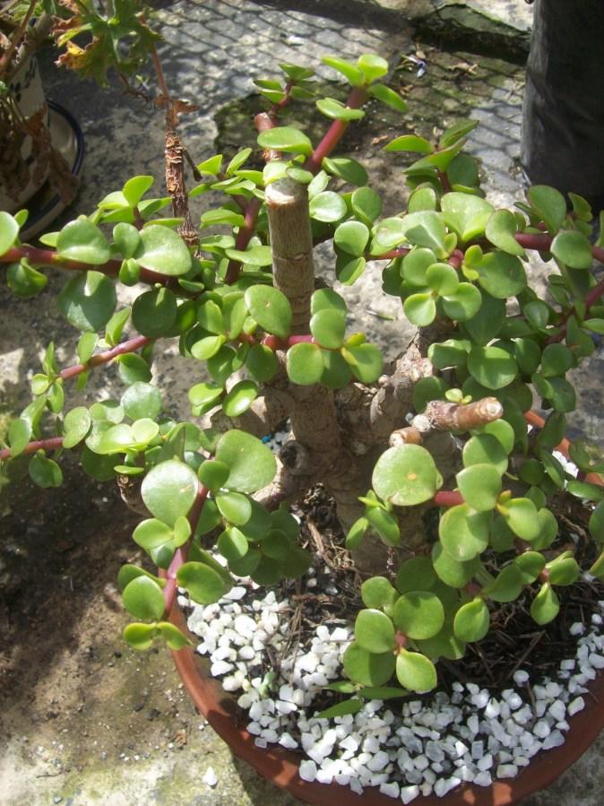 Elegir plantas de interior - Plantas para atraer el dinero ...
