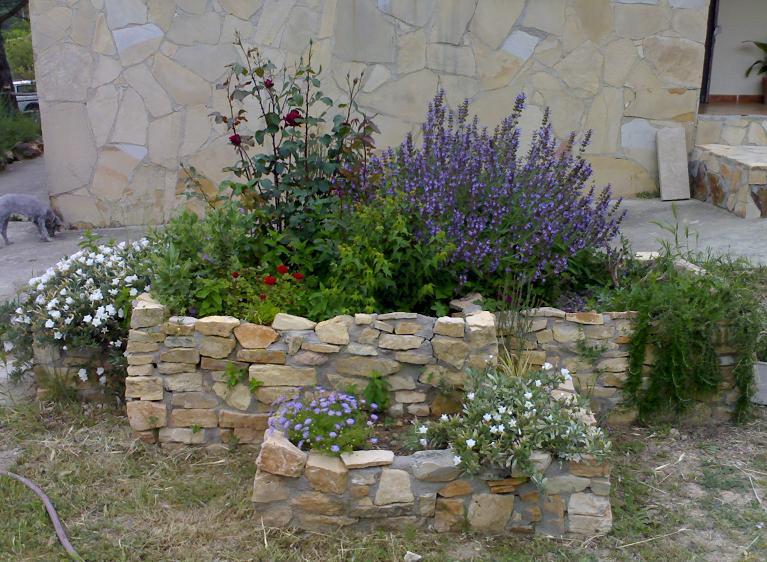 Combinaciones de rosales con otras plantas for Jardineria rosales