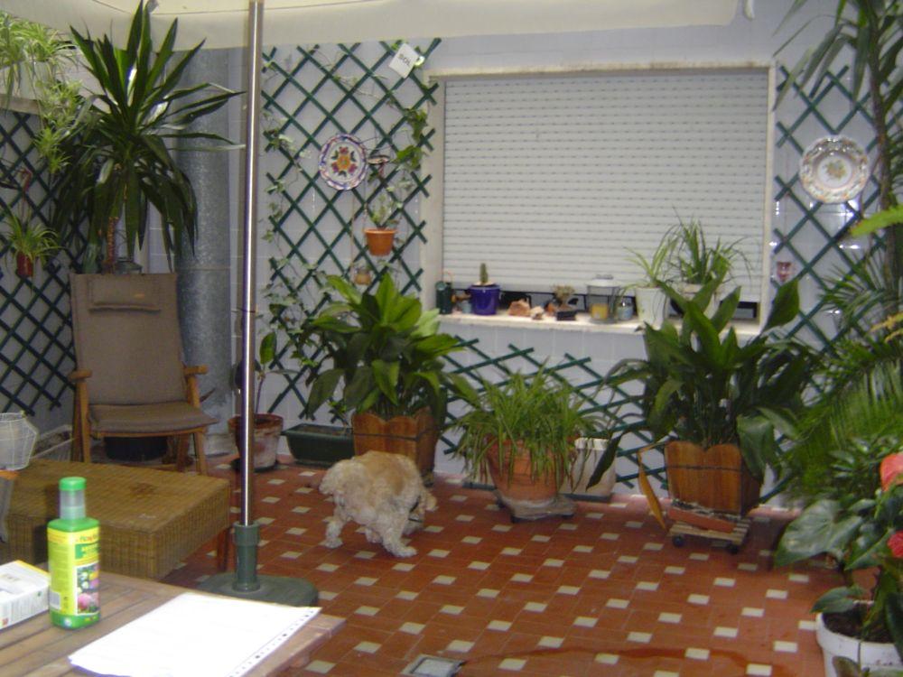 Decoraci n de patios con plantas for Patios con plantas