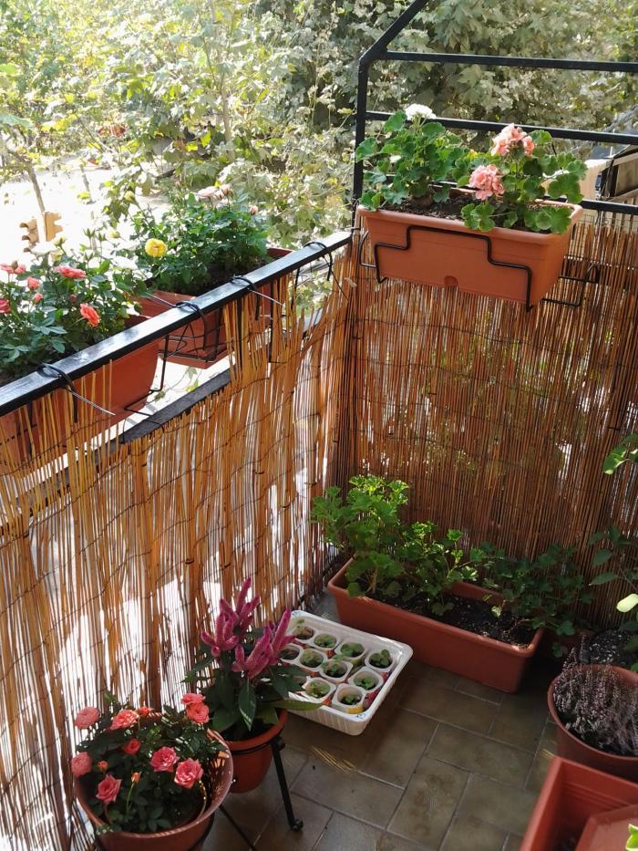 Fotos de balcones con plantas for Balcones con plantas