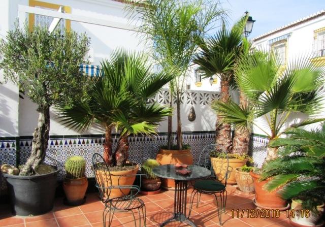 Fotos de patios con plantas for Patios con plantas